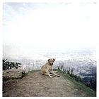 Dog days Bogotá