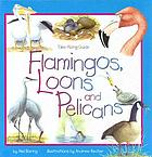 Flamingos, loons, and pelicans