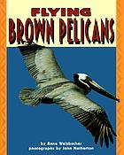 Flying brown pelicans