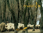 Miorița : an icon of Romanian culture