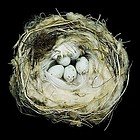 Nests : fifty nests and the birds that built them