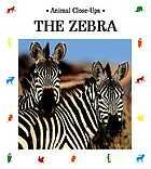 The zebra, striped horse
