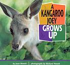 A kangaroo joey grows up