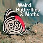 Weird butterflies & moths.
