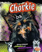 Chorkie : a cross between a chihuahua and a yorkshire terrier