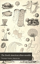 The North American slime-moulds; being a list of all species of Myxomycetes hitherto described from North America, including Central America,