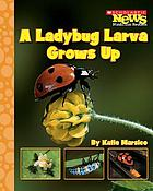 A ladybug larva grows up