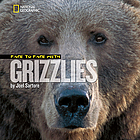 Face to face with grizzlies