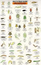 Mac's field guide to garden bugs of the Pacific Northwest
