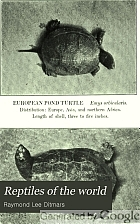 Reptiles of the world: tortoises and turtles, crocodilians, lizards and snakes of the eastern and western hemispheres,
