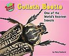 Goliath beetle : one of the world's heaviest insects
