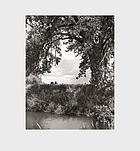 Cottonwoods : photographs, and a conversation about picture-making in the American West